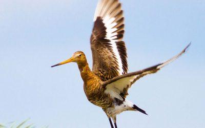 Alarm over de weidevogel